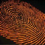 Do identical twins have the same fingerprints