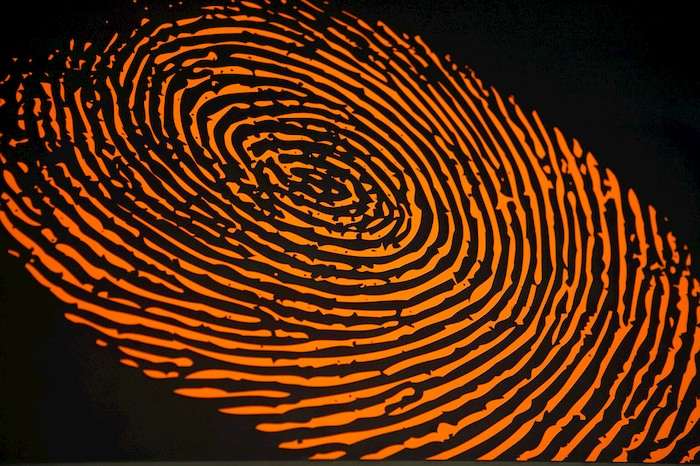 Do identical twins have the same fingerprints