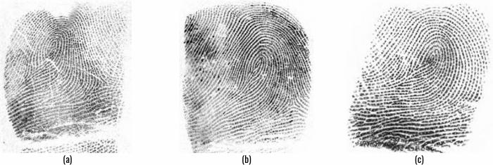 twins fingerprints